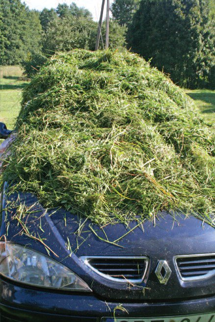 Grass drying on the car
